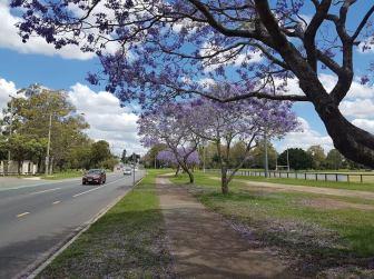 Shaw road jaca